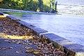 Autumn, Stanley Park Oct, 2015 - 21965140981.jpg