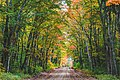 Autumn Dirt Road - Hiawatha National Forest, Michigan (30354315253).jpg