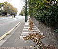 Autumn Leaves - geograph.org.uk - 1518368.jpg