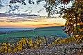 Autumn Vineyard (79966697).jpeg