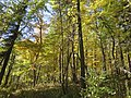 Autumn in Devil's Lake State Park - panoramio (1).jpg