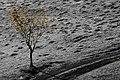Autumn tree (24019277692).jpg