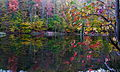 Autumun-tree-leaves-reflecting-lake - West Virginia - ForestWander.jpg