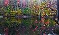 Autumun-tree-leaves-reflecting-lake - West Virginia - ForestWander.jpg