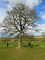 Avebury - Wishing Tree - geograph.org.uk - 721231.jpg