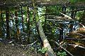 Baden-Württemberg, Schorndorf, Naturdenkmal FND 81190670056 11.jpg