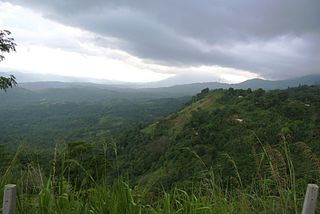 Sri Lanka lowland rain forests