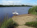 Balancing pond at the end of Avon Water, Keyhaven - geograph.org.uk - 503254.jpg