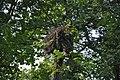 Baltā stārķa ligzda Nr.2992, Suntažu pagasts, Ogres novads, Latvia - panoramio (1).jpg