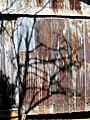 Barn with Tree Shadows Art in the Garden Hillsborough NC 3706 (36143413035).jpg