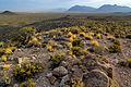 Basin and Range National Monument (21422853648).jpg