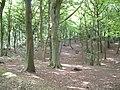 Bassett Wood - geograph.org.uk - 37095.jpg