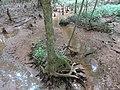 Battle Creek Cypress Swamp 36.jpg
