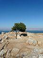 Baum am Aussichtspunkt (4212521255).jpg