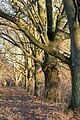 Baumgruppe im Landschaftsschutzgebiet Norduckermärkische Seenlandschaft in der Nähe des Küchenteiches bei Boitzenburg.jpg