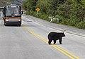 Bear Crossing Road 20.jpg