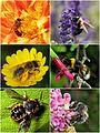 Bee montage.jpg