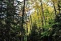 Beech Mountain trails (cca56aa3-7dc3-4e63-9716-518ca4755775).jpg