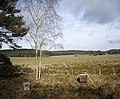 Beehives near Little Minew - geograph.org.uk - 1179942.jpg