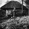 Berčanova Marija, Sv. Vrh, meša ličkanje z grabljami 1951.jpg