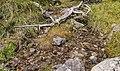 Bergtocht van S-charl naar Alp Sesvenna. 10-09-2019. (actm.) 27.jpg