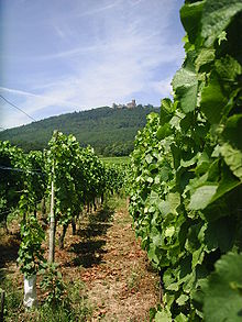 Elzas (wijnstreek) - Wikipedia