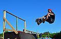 Best Trick Contest – Wilwarin Festival 2015 08.jpg
