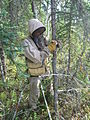 Biologist versus mosquito. Head to toe clothing is a must when conducting field work here. Botanist Sarah Stehn measures the diameter of a spruce tree in the western lowlands of Denali NP. (8446140058).jpg