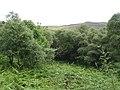 Birchwoods, Loch Brora - geograph.org.uk - 1112292.jpg