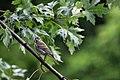 Bird (4855077321).jpg