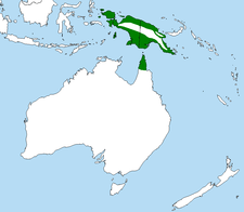 Australian Palm Cockatoo range (in red)