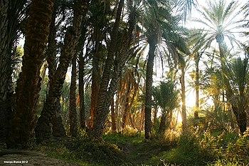 Biskra-Sidi Okba (nature) - panoramio.jpg