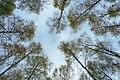 Bjørkeplantefelt 01.jpg