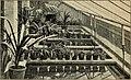 Blätter für Aquarien- und Terrarien-Kunde (1901) (20386347965).jpg