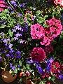 Blütentraum - panoramio (3).jpg