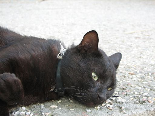 Black cat in Sudak