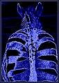 Blacklight Zebra (32800031388).jpg