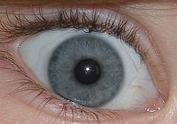 Blue Green Eye Closeup Jpg