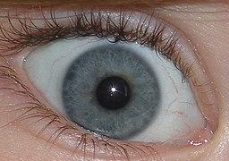 Blue-green eye closeup.JPG