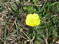 Blume Rosenau.JPG