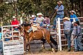 Boddington Rodeo 2015 (128247915).jpeg
