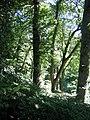 Bodnant Woodland - geograph.org.uk - 518932.jpg