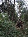 Bosque en Chanquín 01.jpg