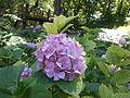Botanička bašta Jevremovac 077.JPG
