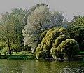 Botanical Garden. Moscow. 2020 01.jpg