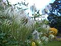 Botanical Garden Poznan xxxx (3).jpg