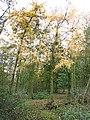 Braceby Woodland - geograph.org.uk - 87295.jpg