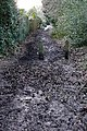 Bridleway at Whitchurch Hill - geograph.org.uk - 1166824.jpg