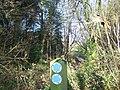 Bridleway junction in Squirrel Wood - geograph.org.uk - 1080322.jpg