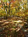 Bright-fall-colors-trail - West Virginia - ForestWander.jpg